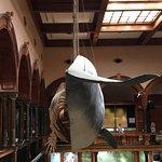 Bishop Museum Foto