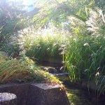 Rooftop water garden