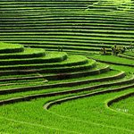 The Lush Rice Field in Jatiluwih Village