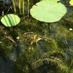Photo de Atlanta Botanical Garden