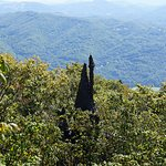 "The top pf the ""witches castle"" peaking through the tree-tops of the North Carolina mountains"