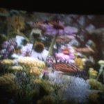 4D Movie Flight of Butterly