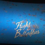 4D Movie Flight of the Buterfly