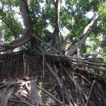 Photo of Anping Tree House