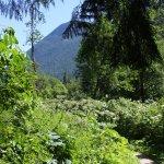 A trail view.