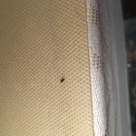 AVOID AVOID! Rooms Filthy and full of bed bugs!!!