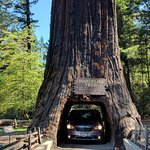 Road through the tree