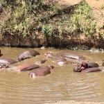 Photo of Serengeti Hippo Pool