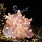 Photo of Bastianos Lembeh Dive Resort