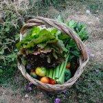 Photo of Agriturismo Aia del Tufo