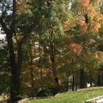 Fall color along the back yard and the Huron River