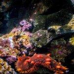 Rockfish, sea cucumber and sea stars
