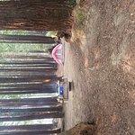 KOA Campground Crescent City