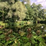 Tiergarten Foto