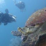 Look! A sea turtle!
