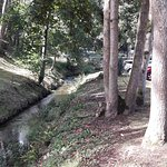 The wooded stream