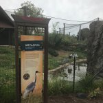 Zoo Knoxville Foto