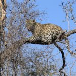 andBeyond Ngala Safari Lodge Foto