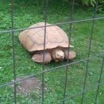 Photo of Veszprem Zoo