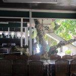Tree inside restaurant