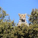 Mateya Safari Lodge Bild