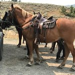 These horses are well groomed and well fed.  Ready for the trail.