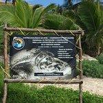 Billede af Turtle Snorkeling in Akumal