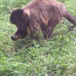 Monkey World의 사진