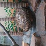 ChattBir Zoo