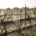 Our grapes are biologically grown in self sustaining vineyards and made with minimal interventio