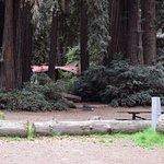 Big Sur Campground & Cabins Resmi