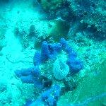 Photo of Sea Ventures Dive Center