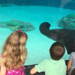 The kids enjoy watching the sharks and rays