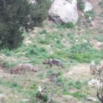 Photo of Parc animalier des Angles