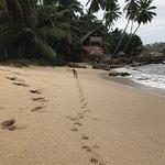 Photo de Palm Paradise Cabanas
