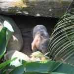 Photo of Kuranda Koala Gardens