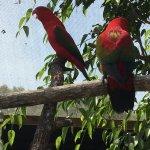 Photo of Birdworld Kuranda