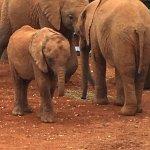 11am - meet the elephants