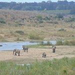 Photo de Buckler's Africa