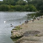 Some of the residents of Straws Bridge