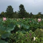 Foto de Kenilworth Park and Aquatic Gardens