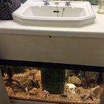 Under sink fish tank