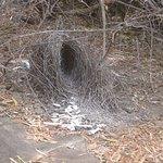 Bower Bird's Bower just outside Picnic Spot