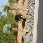 Photo de The Westin Desert Willow Villas