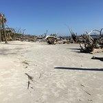 A view of Driftwood Beach.