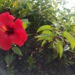 IMG_20170915_105754_large.jpg