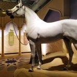 Arabian horse exhibit