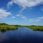 Everglade Grassland