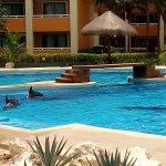 Swim with dolpins in the Bahia Principe Tulum resort next to Coba