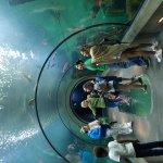 Photo de Oregon Coast Aquarium